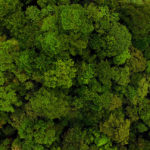 Project: Carnegie Institute Andes-Amazon Forest Monitoring